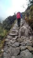 Me_trail