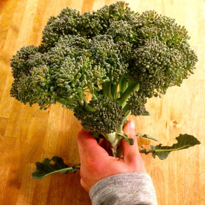 broccoli - 2